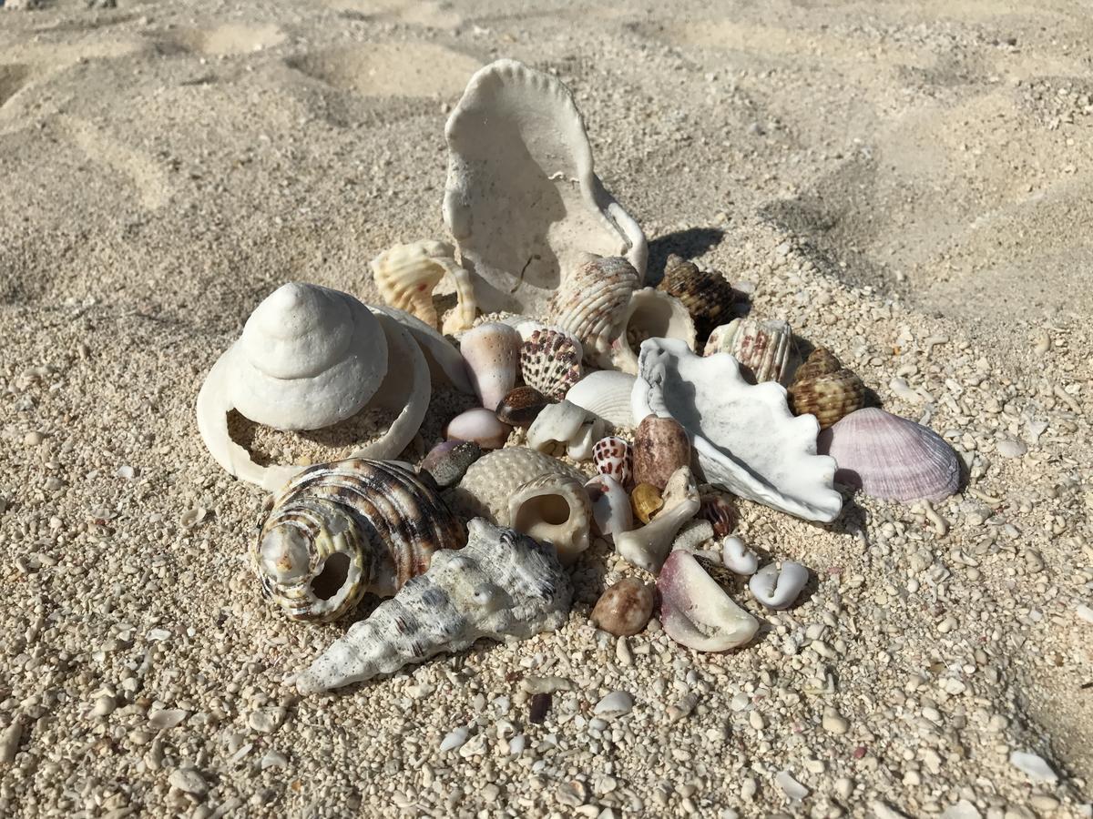 終端之濱上超多貝殼,記得撿完不可以帶走,把美麗留給自然。