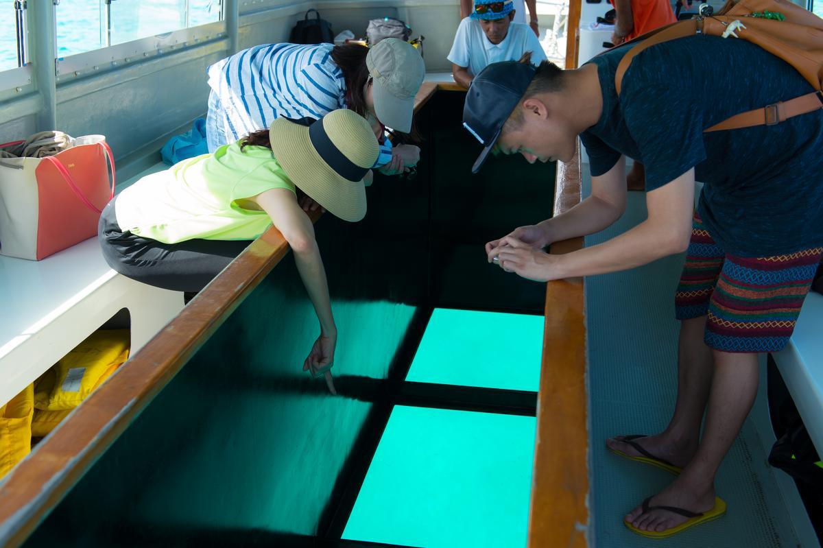 搭船前往終端之濱時,可透過玻璃船底欣賞海面下風景,海水能見度高,珊瑚生態一覽無遺。