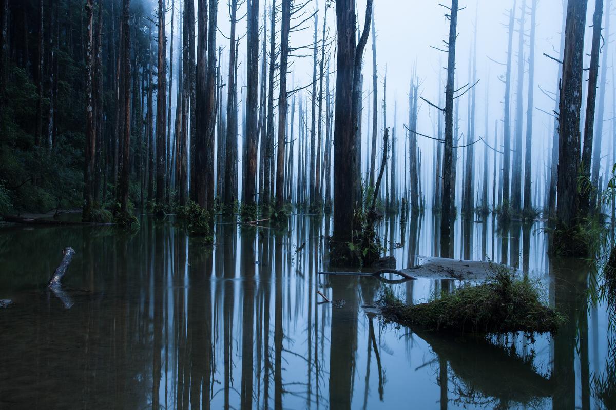 霧中的水漾森林。