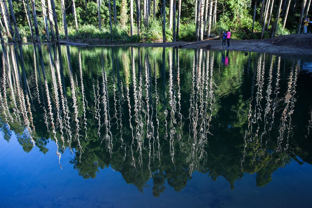 杉木倒映在水中,像是活了起來。