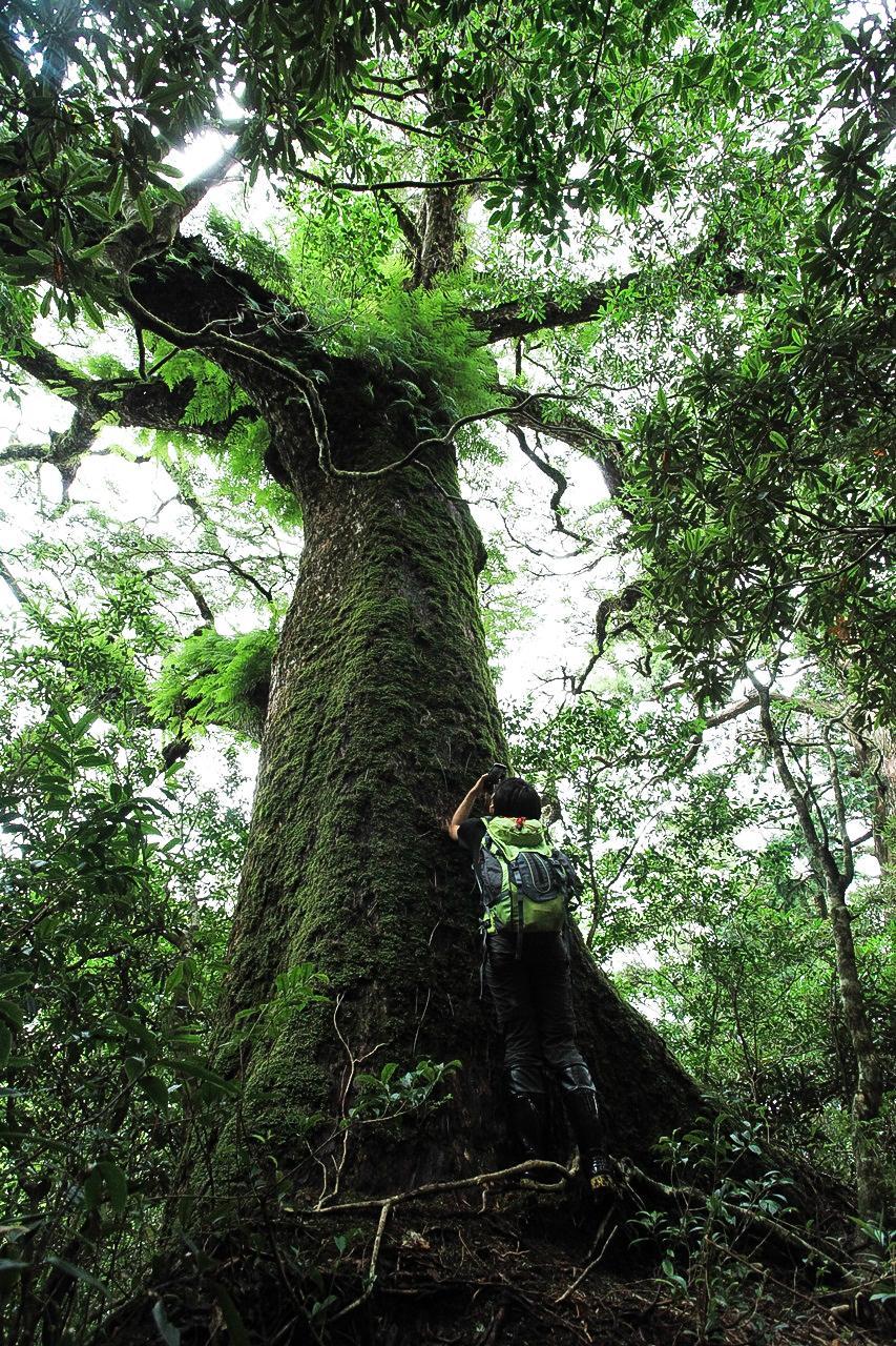 在巨木下,人類顯得渺小。