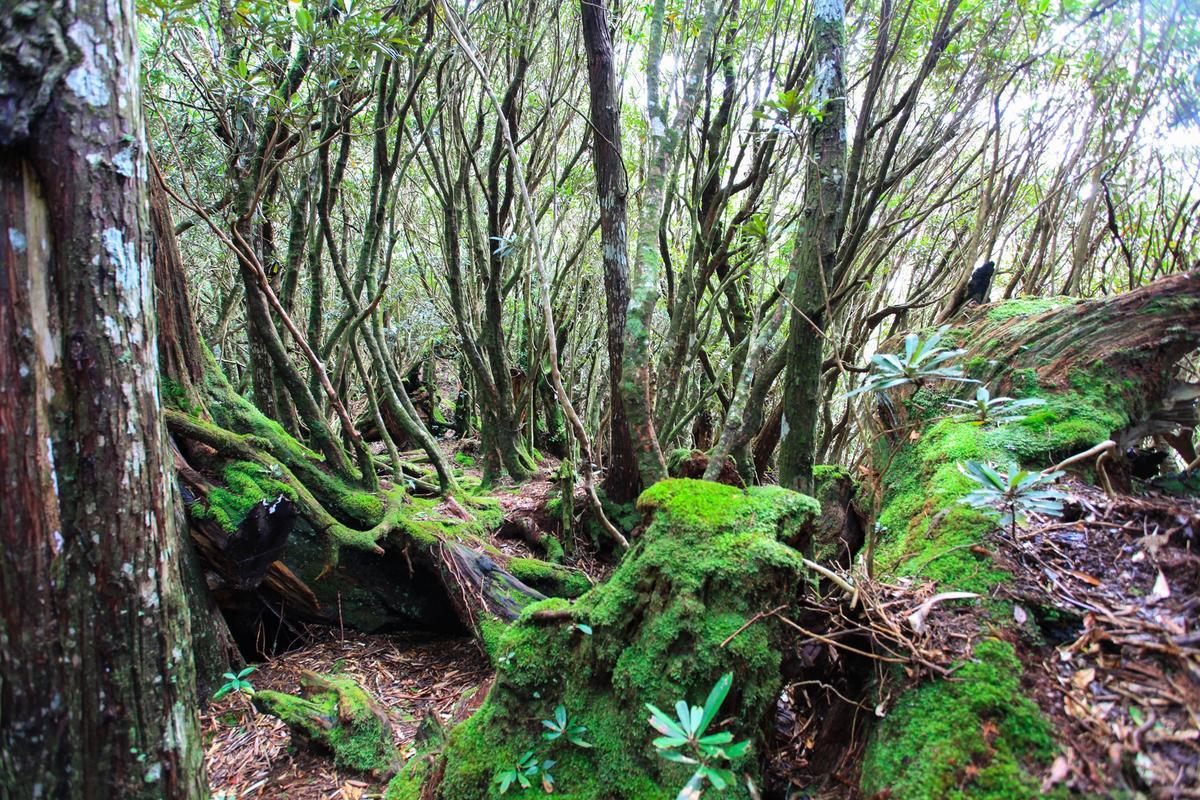 林相豐富,是中級山的特有景觀。