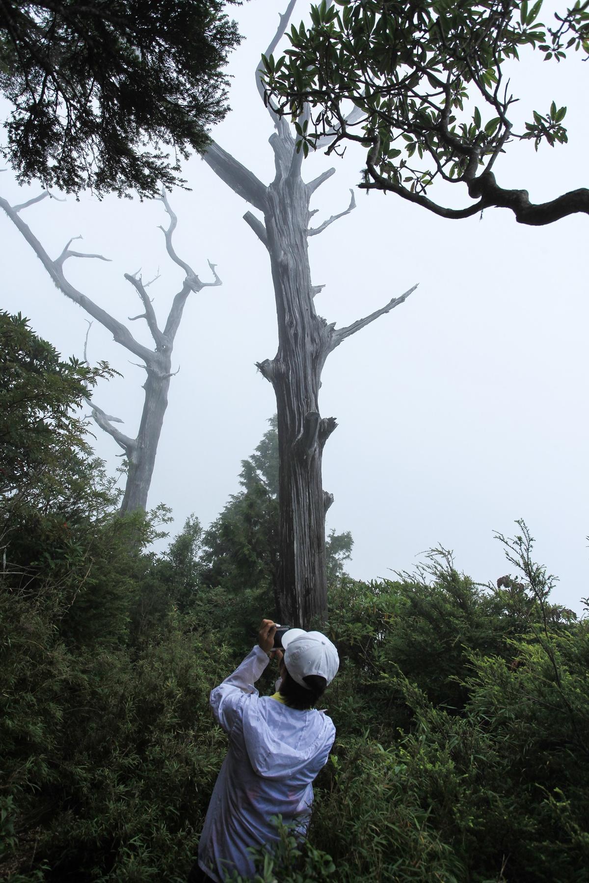 塔曼山往玫瑰魔西山的唯一展望點,經常是一片大霧,什麼都看不到。