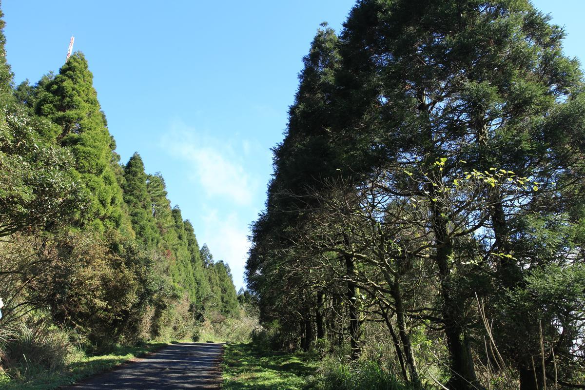 戰備道旁的松樹超美。