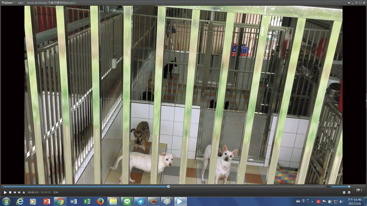 屏東保育場內平面籠舍犬隻零零落落,密度不高。