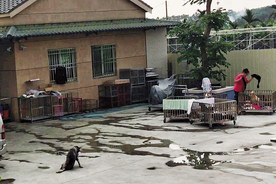 保育場占地千坪,廣場仍有很大空地,在外面休息的犬隻數量不多。