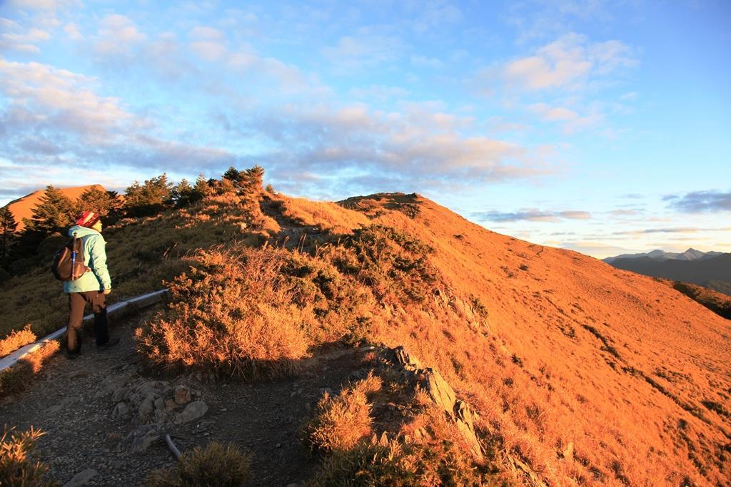 清晨的日出,陽光映照出高山上的金黃色草原。