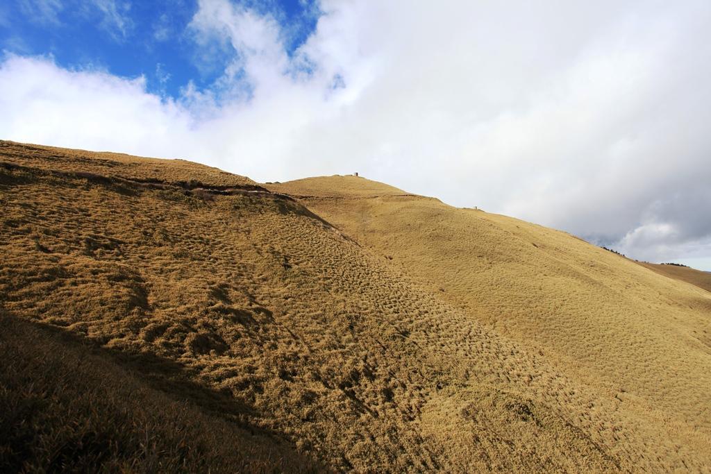 前往合歡主峰的路途,是一片廣大箭竹林。