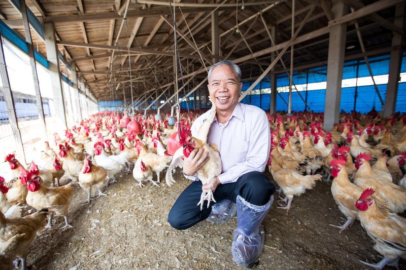 養雞近40年,凱馨實業董事長鄧進得抱雞像在抱小孩,與雞互動是他最放鬆的時刻。