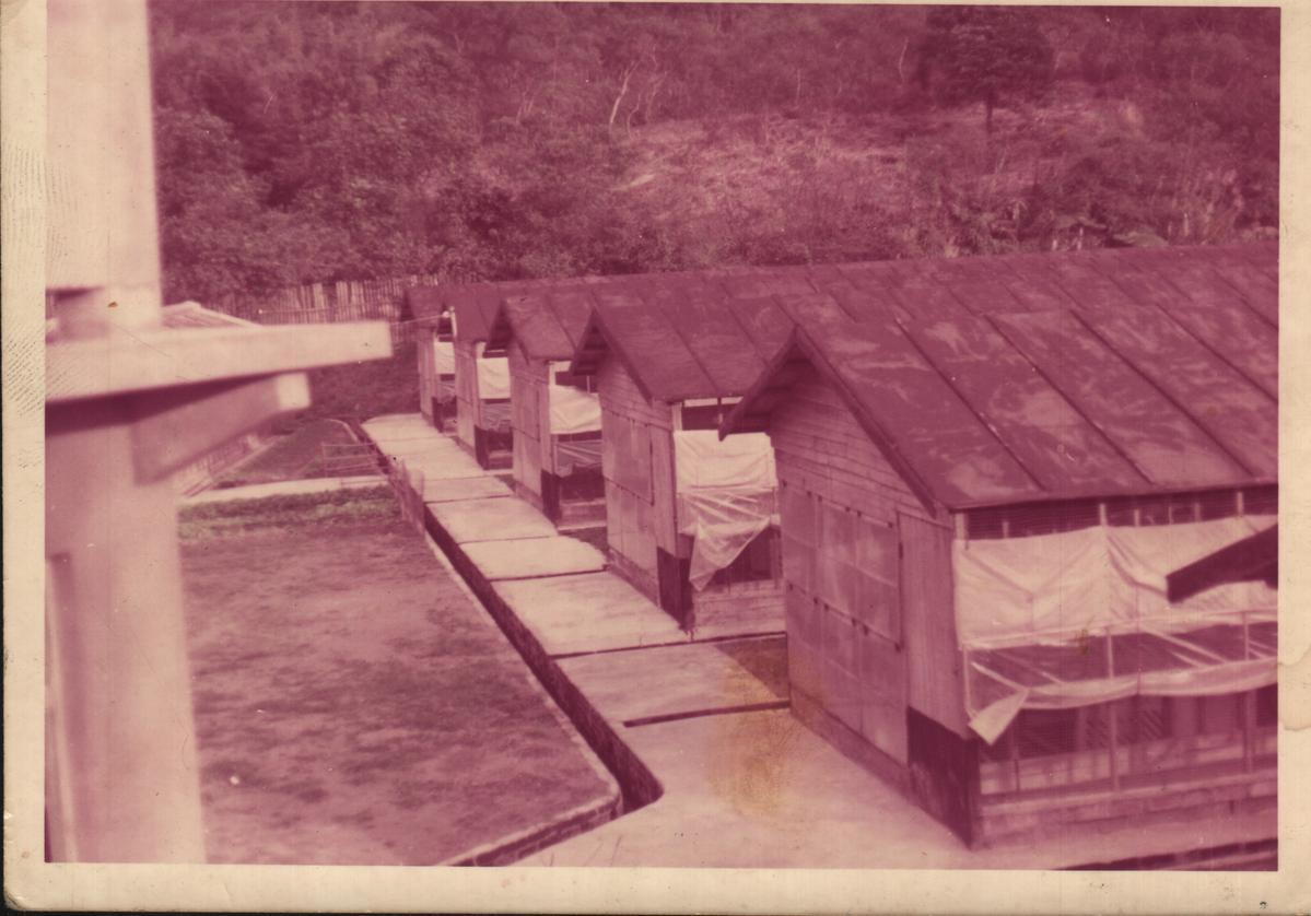 1979年,在謝錦達的建議下,鄧進得決定自行創業,成立旭泰畜牧場。(凱馨提供)
