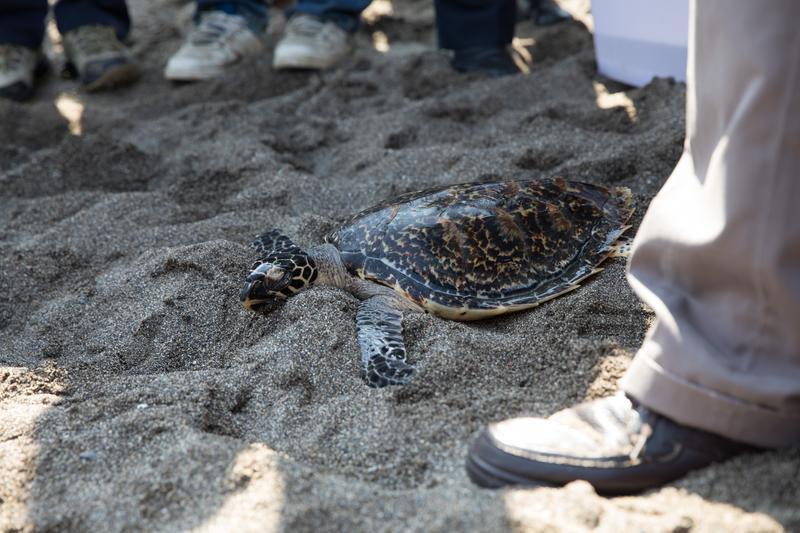 程一駿把HOLA抱到沙灘上,目送他回歸大海懷抱。