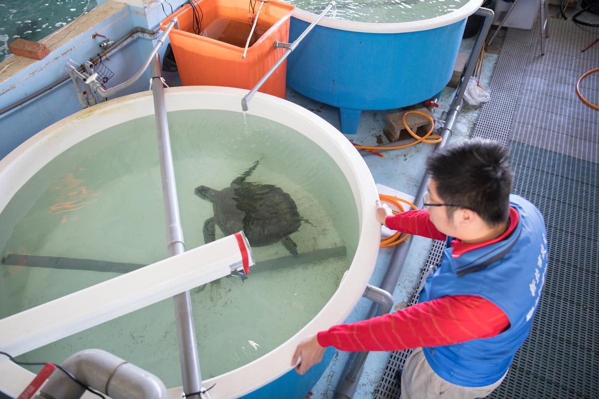 海龜病房中共有6個、約100公分高水槽,用來讓海龜暫時生活。