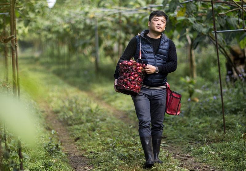 曾經入獄10年,莊明諺出獄後接手父親的果園,20公頃農地全種樹番茄,色澤之鮮紅被他形容為「紅寶石」,也為他賺進80萬元月營收。