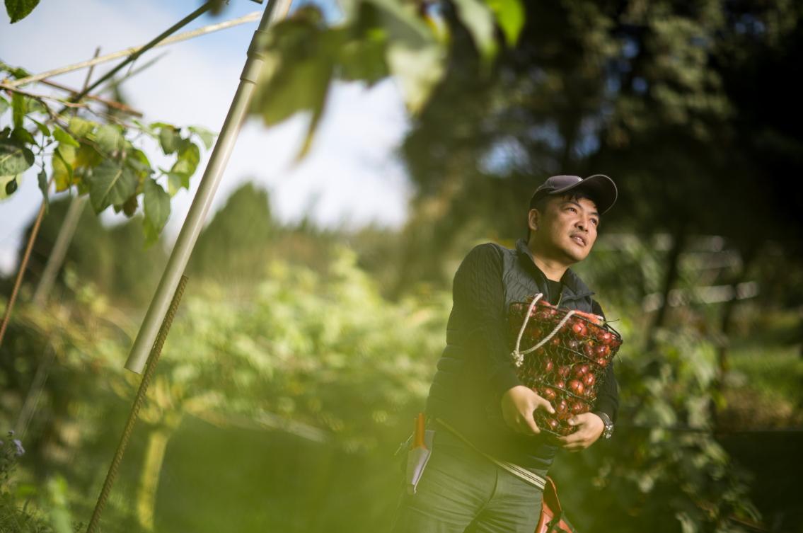 曾經入獄十年,莊明諺出獄後接手父親的果園,20公頃農地全種樹番茄。