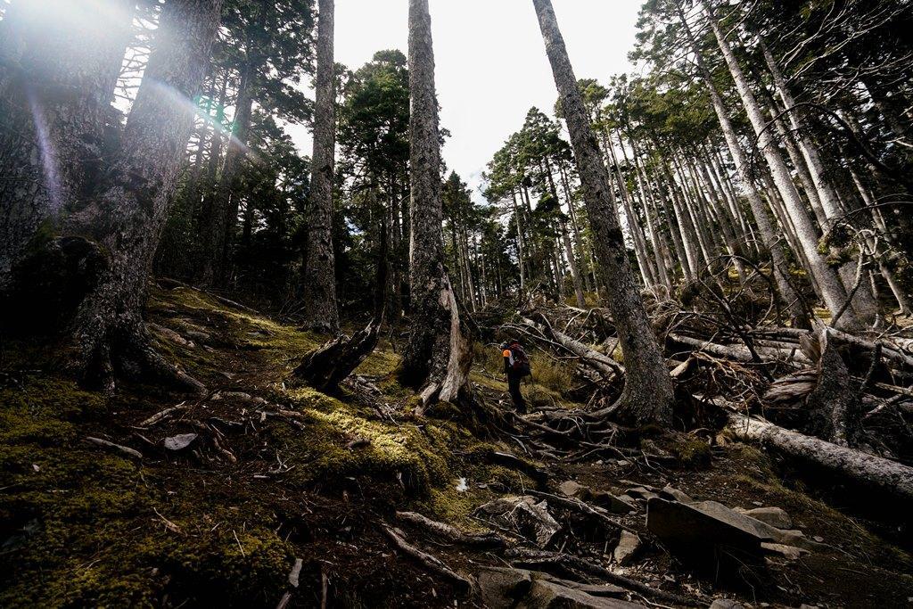主峰前的黑森林。