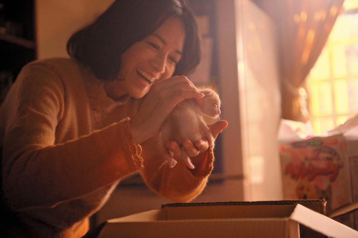 《 衣櫃裡的貓》是公視人生劇展「50+」主題的作品之一,故事圍繞著「家」的溫暖與傷痛治療的歷程。(公視提供)