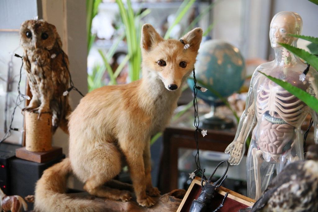 轉頭一看,一隻小狐狸在身旁。