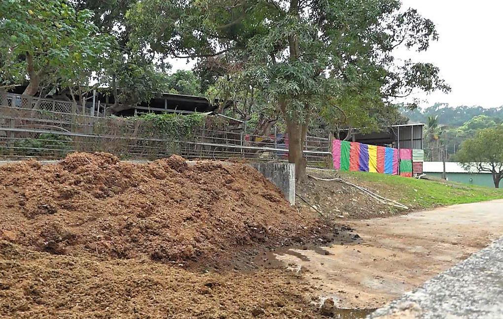 堆積超過一公尺的牛糞,一遇下雨天,就會沿著山坡地,流到馬路上。