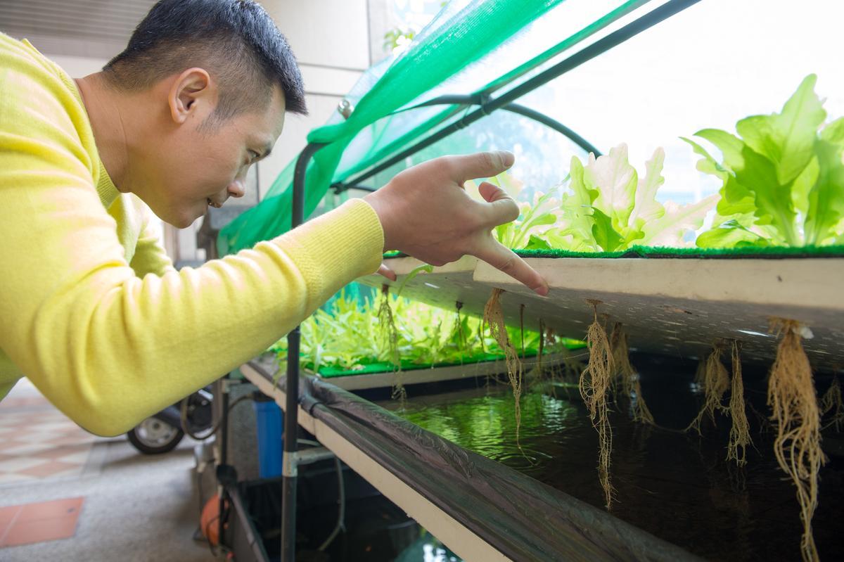 老闆歐亨在門口開闢一處魚菜共生的實驗計畫。