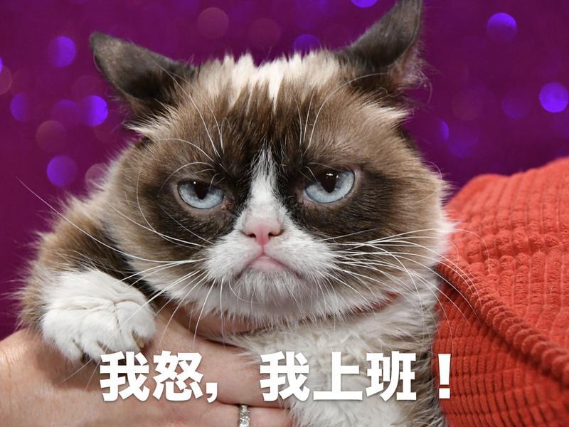 2016年7月23日,因為滿臉不爽的神情而成為網路明星的「臭臉貓」(Grumpy Cat),到英國倫敦杜莎夫人蠟像館迎接自己的電子蠟像入駐館內。(東方IC)