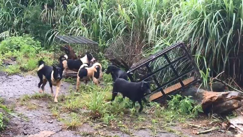 犬隻被棄養的地點鄰近活動中心和芝柏山莊。