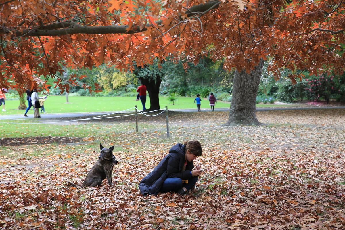 城市居民喜歡帶著自家寵物,在皇家植物園裡偷得浮生半日閒。