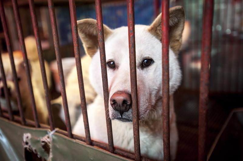 2014年,南韓釜山,一隻狗兒在龜浦牲畜市場的籠子裡,等待被宰殺的命運。(東方IC)