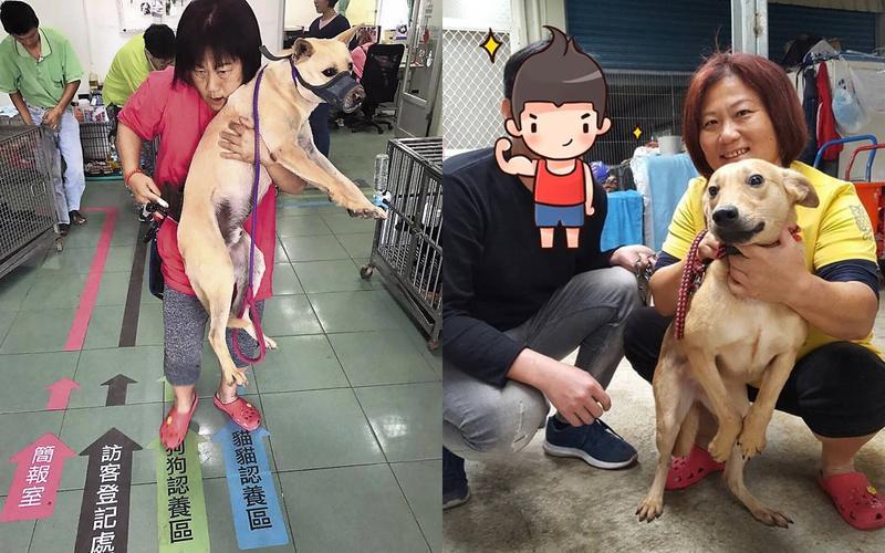 姜媽媽聲稱自己照料近700多隻流浪犬隻,急需外界援助。(翻攝姜媽媽狗園臉書)