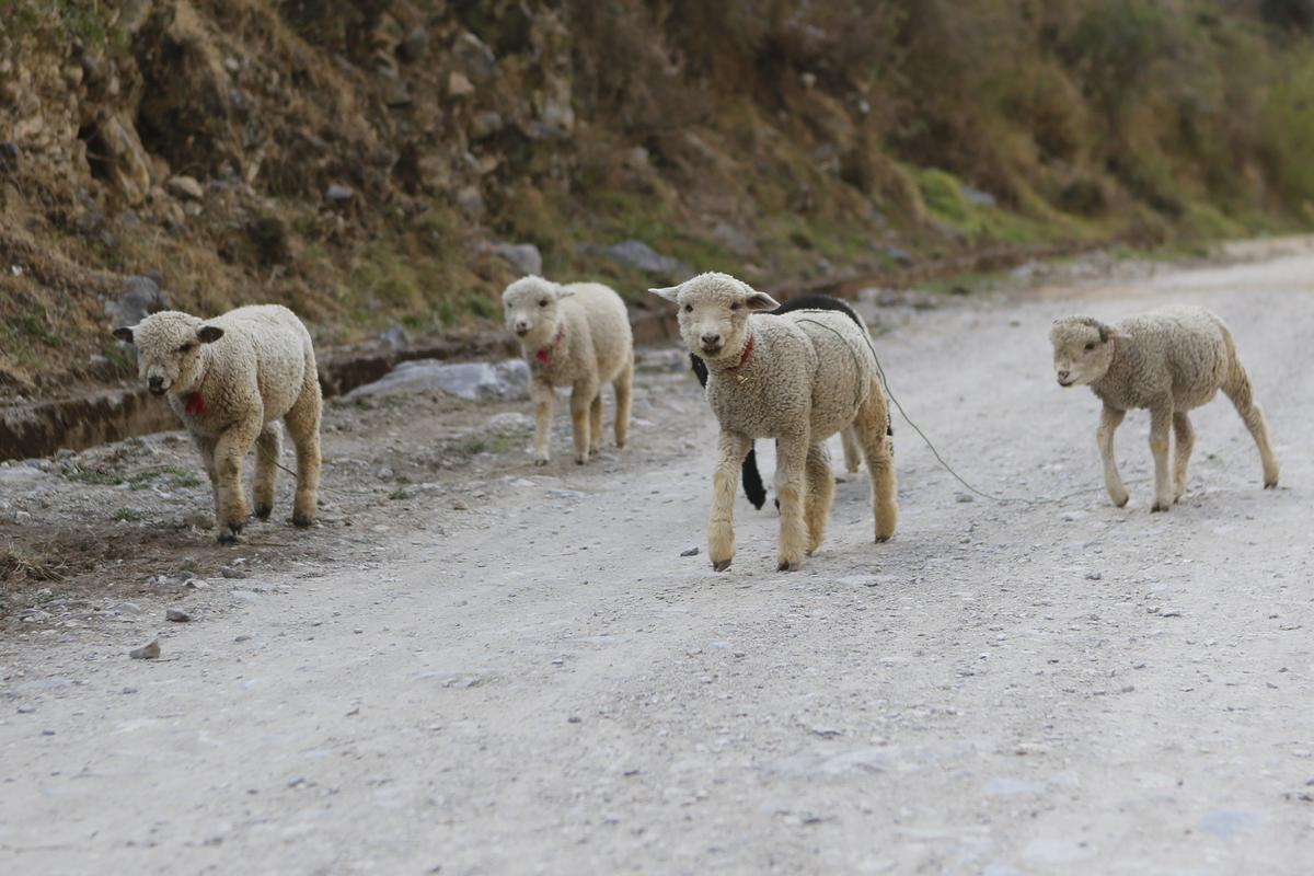 往萬卡亞沿途的山路。