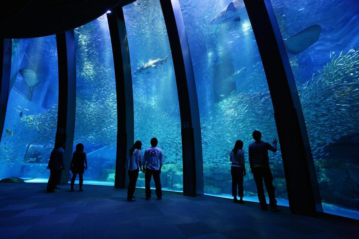 國壽去年底宣布攜手日本最大水族館業者西武集團,2020年要在桃園蓋都會型水族館。(翻攝西武集團橫濱八景島樂園官網)