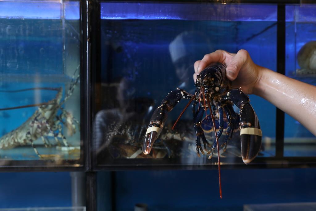法國進口的藍寶石龍蝦,又叫做布列塔尼龍蝦,特色是口感近似蟹肉,比較細緻,是近年最時興的食材。
