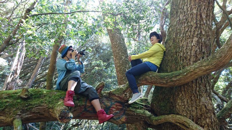 塔曼山雖歸屬於中級山,但路徑簡單易走,很適合女生與新手。