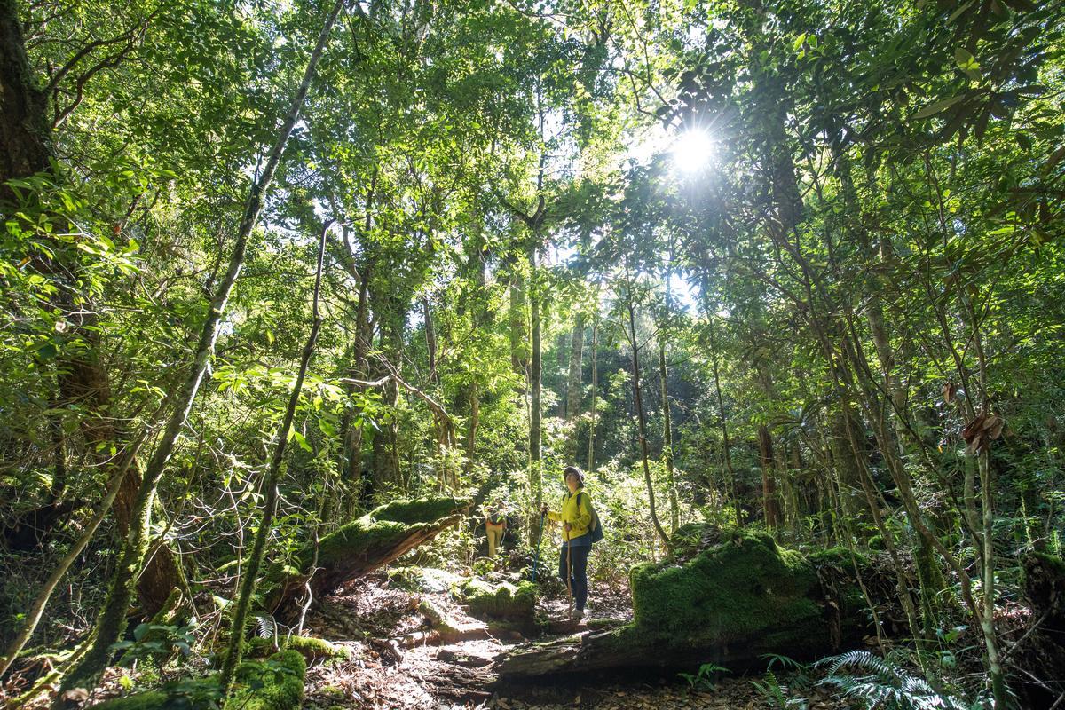 太陽光線灑落時,森林呈現如畫景象。