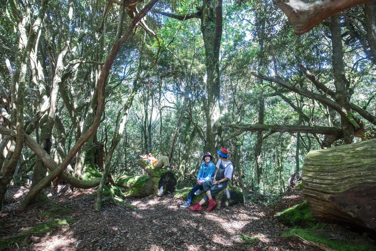 杜鵑林是塔曼山上最令人驚訝的場景。