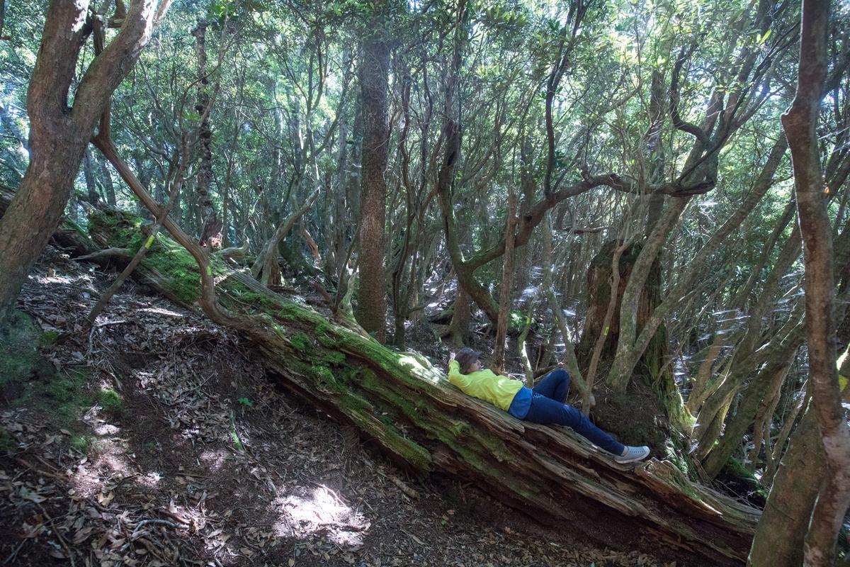 森林裡的倒木,每個都是裝置藝術。