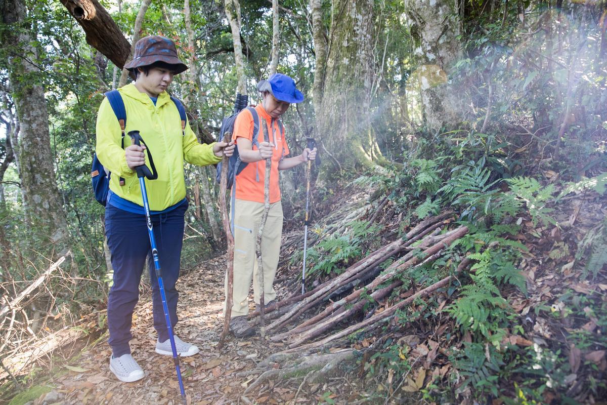 登山口的木杖,協助大家輕鬆行走,但回程請擺放回原處,供其他人使用。