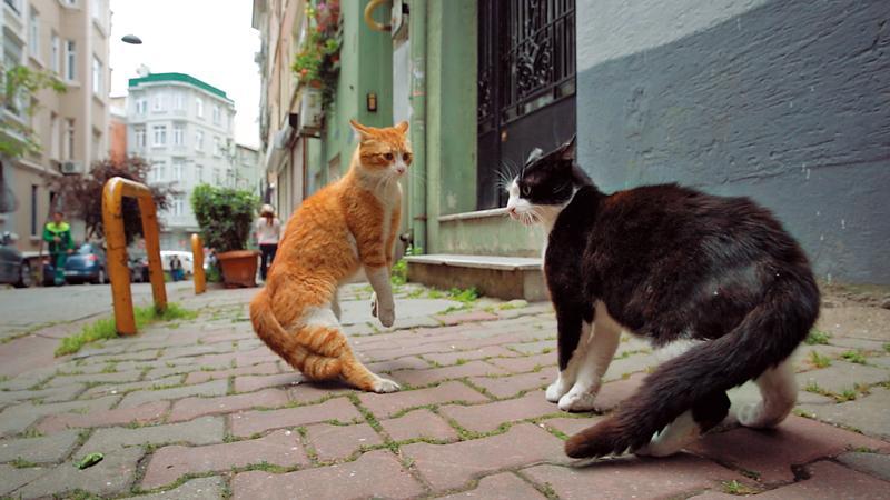 《愛貓之城》記錄了伊斯坦堡大街小巷的貓與人,從貓身上挖掘的特質,甚至折射出人與動物、城市、及信仰之間的關連。(絕色國際提供)