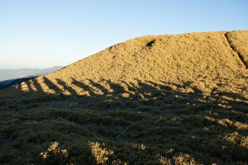 奇萊南華的矮箭竹,讓高山也變得溫柔。