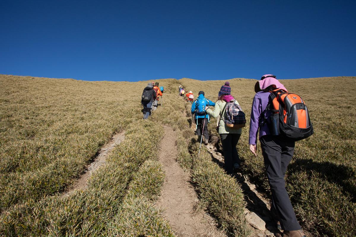 矮箭竹大約只到人的小腿肚,但高山紫外線強烈,防曬是必要功課。