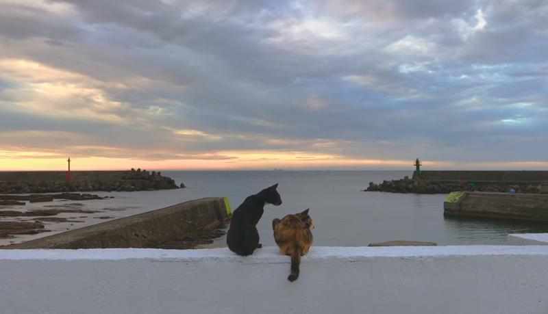 原子邦妮再推新曲〈現在你好嗎〉,MV有許多貓在鏡頭前展現各種姿態。(圖取自Youtube)