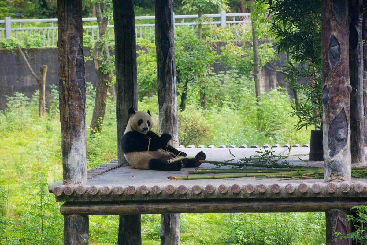 這是我們看見的雅安。雅安碧峰峽熊貓基地,hi~算是風景了吧。