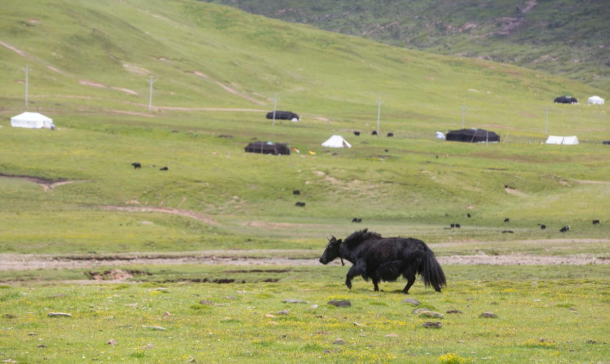 傳統藏族逐水草而居,我們路過並遠觀很多這類風景。