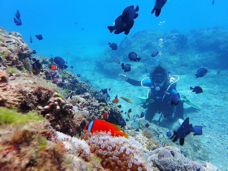 小琉球海底世界色彩繽紛,完全不輸國外著名潛點。