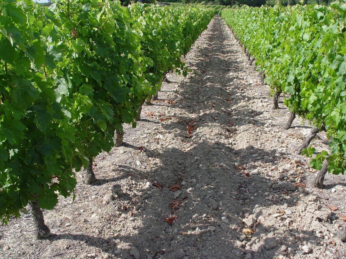 布萊谷的土壤為與法國香檳區相同的白堊土。(星坊酒業提供)