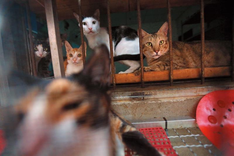 貓坑環境擁擠、異味濃厚,許多貓為了透氣,全擠到窗口好奇地向外看。