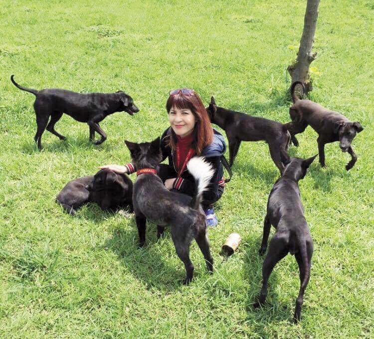 林珍奇每天最快樂的時候,就是帶著狗狗出外散步,看狗狗們滿山跑,林珍奇的笑容也特別甜美。