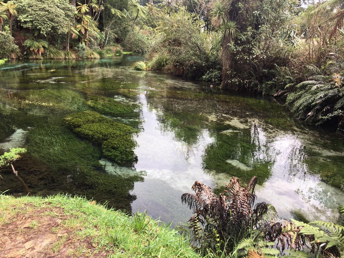 紐西蘭歸還毛利人的領地,風景如畫。
