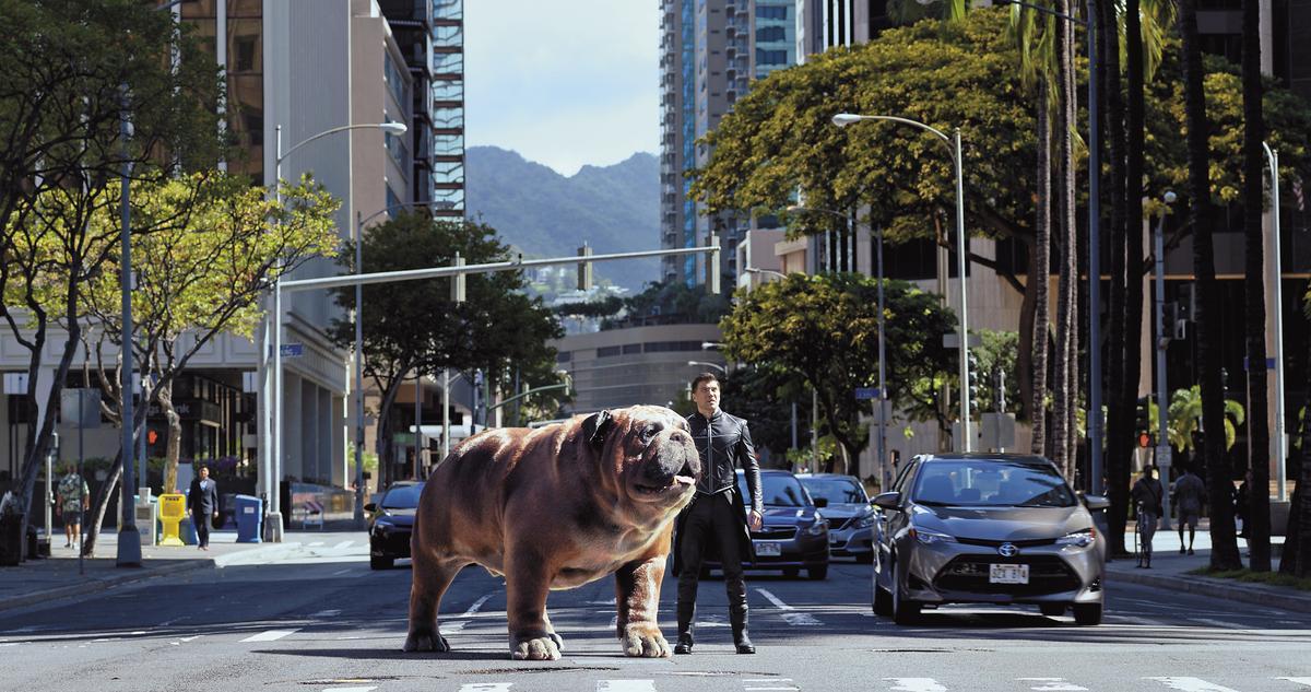 「黑蝠王」在情急之下,利用鎖齒狗的瞬間傳送超能力,逃到了夏威夷,因鬥牛犬太可愛,因此虜獲不少粉絲的心。
