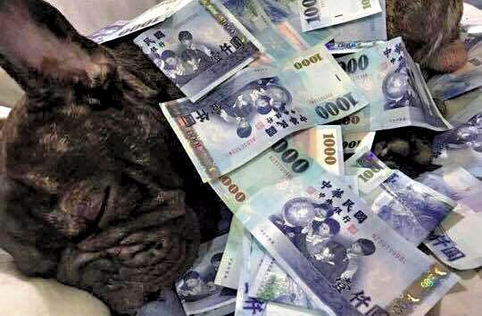 李男每月有20萬元零用錢,還曾將鈔票給狗當棉被炫富。(翻攝李男臉書)
