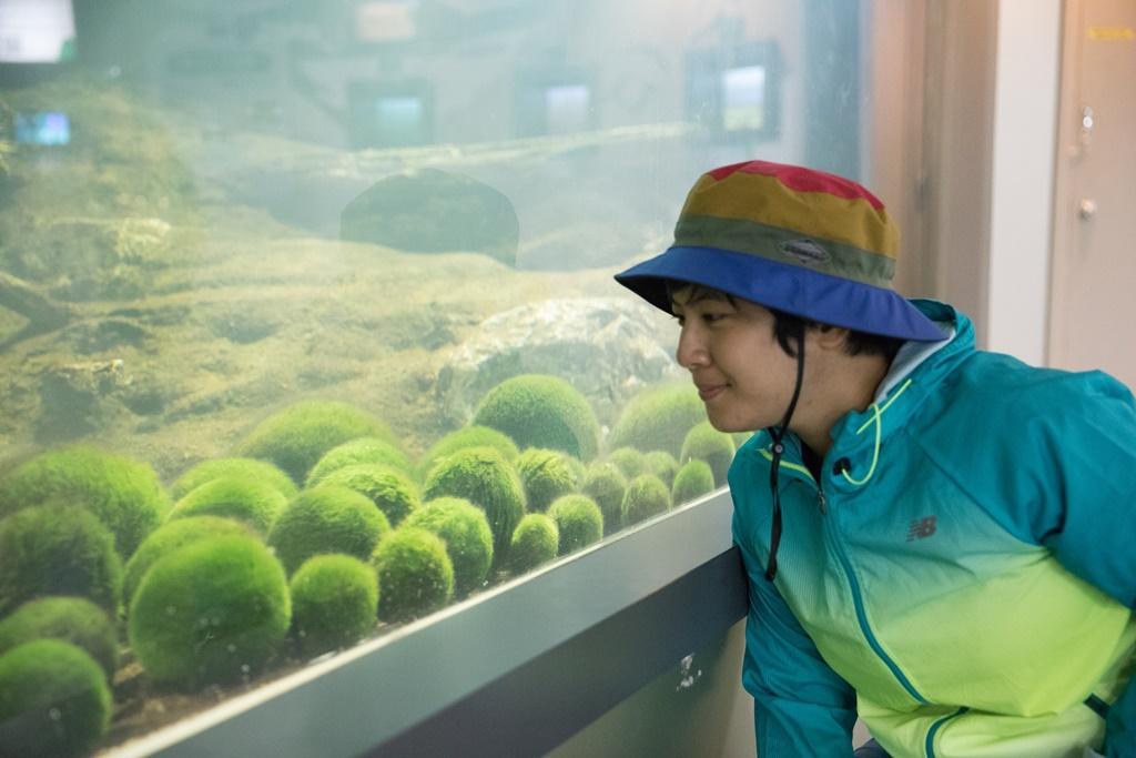 在阿寒湖底下生存的許多綠球藻,也是夏希燈的設計靈感。